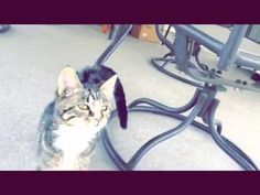 YouTube- my cats going to dubstep