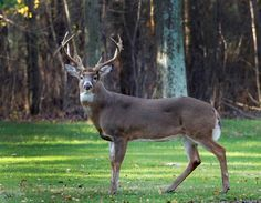 Five mistakes to avoid when deer hunting