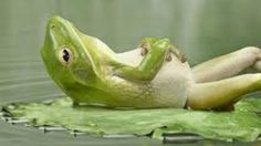 Learn to relax. It is a skill. This article will help you understand how to learn to relax and what will happen during the learning process. Weekend Humor, Bon Weekend, Weekend Vibes, Funny Animals, Cute Animals, Clever Animals, Vídeos Youtube, Funny Frogs, Louise Hay