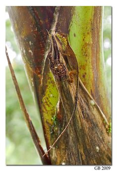 Camouflaged - Nature Photography by Glenn Bartley - Ecuador Nature Photography