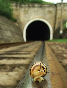 This photo shows a great depth of field because the snail is in focus and the bridge isnt, its blurred. the photo isnt dark, it's quite light. I think a large number of aperture has been used for example F4 or F5. The mood this photo puts you in, is a scary mood because the snail and the photo is taken on a train track and it creeps you out to think a train cold come flying round the corner.