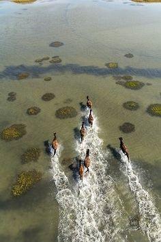 Wilde paarden in het kustgebied van Shackleford Banks, North Carolina, Verenigde Staten.