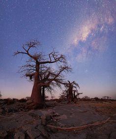 landscape photo of the milkyway over the boabab trees of Kubu Island in Botswana