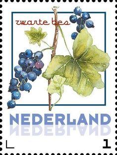 Stamp: Blackcurrant (Netherlands - Personalized stamps) (Janneke Brinkman-Salentijn-Fruits) Col:NL 2017-068