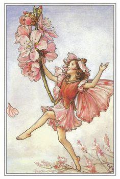 The Almond Blossom Fairy Cicely Mary Barker Flower Fairies Vintage Print 1995 Wall Art Nursery Decor Fairy Print Home Decor Print Fine Art