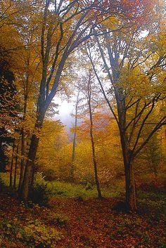 Fall impressionist
