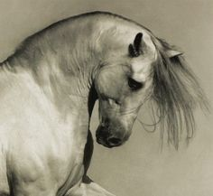 la-pitonisa-tropical:    byWojtek KwiatkowskiforGus Gus's Arabian Horse album