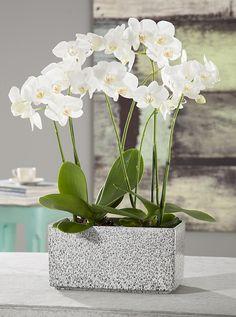 Black Spirit von Scheurich - effektvolles Outfit für Orchideen & Co. #blackspirit #scheurich #scheurichceramics #scheurichkeramik #germanpottery #plantpots #pots #pflanzschale #uebertopf #blumentopf #pflanzgefaess #orchids #orchidee #natural #homedeco #homedecor #homedecoration