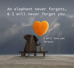 Ashlie Marie Terry I found a grief quote that I think you will like and understand. I have been very busy and I need to slow down and breathe just like you used to say to Brandi and I. I love Elephant Quotes, Elephant Love, Elephant Facts, Asian Elephant, Never Forget You, I Love You, My Love, Jean Christophe, Missing My Son