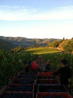 High altitudes - Chianti Classico vineyards of Monte Bernardi