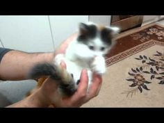 My sweet kittens♡♡♡♡ - YouTube