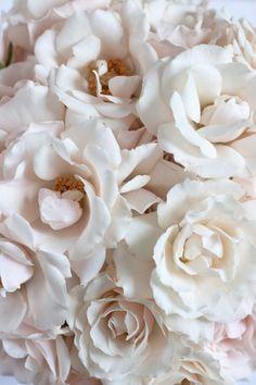 White Majolika Spray Rose - creamy spray rose with a (sometimes) blush center