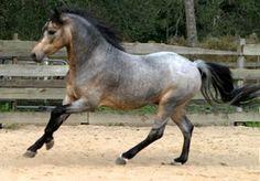 Rare colored horses!