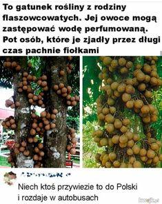 Wtf Funny, Funny Memes, Jokes, Polish Memes, Creepypasta, Lol, Humor, Fandoms, Creepy Pasta