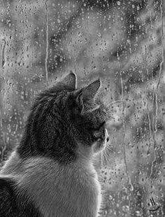 I love cats looking out on the rainy day Crazy Cat Lady, Crazy Cats, I Love Rain, Rain Photography, Rainy Day Photography, Color Photography, Animal Photography, Photo Chat, Singing In The Rain
