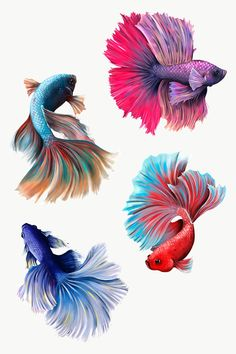 Beautiful betta fish collection design element  | premium image by rawpixel.com / Te Colorful Fish, Tropical Fish, Betta Fish Tattoo, Underwater Drawing, Aggressive Animals, Fish Gallery, Watercolor Fish, Fish Logo, Fish Drawings