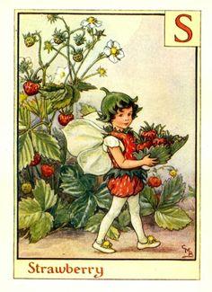 Strawberry Alphabet Letter S Flower Fairy Vintage Print, c.1940 Cicely Mary…