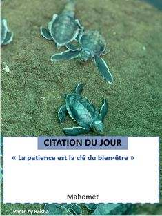 Citations Inspiration, Mahomet, Coaching, Inspirer, Loin, Patience, Motivation, Lenses, D Day