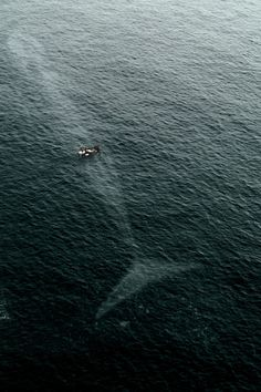 Whale under boat