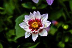 Flower Power by Vânia Ragageles on 500px