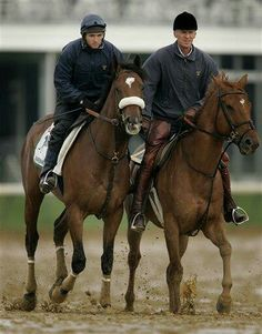 Barbaro All The Pretty Horses, Beautiful Horses, Horse Names, Sport Of Kings, All About Horses, Racehorse, Thoroughbred, Zebras, Kentucky Derby