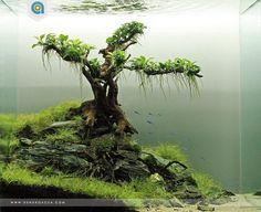 Simon's Aquascape Blog — Favourites: 'Nebari' by Dendroacua A beautiful...