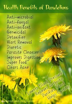 Dandelion Health Benefits