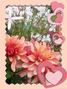 Die 157 Besten Bilder Von Kostenlose Fotos Bilder Blumen