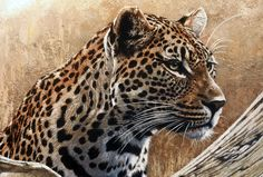 We provide everything new of the images, and this a group of LEOPARD ART with beautiful and different forms to be admired by all people with high quality and appropriate forms. Description from skfny.com. I searched for this on bing.com/images
