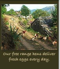 Melanya Mountain Retreat, Bulgaria. Our free range hens lay delicious fresh eggs http://www.organicholidays.co.uk/at/3005.htm