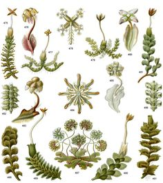 Haeckel's Art Forms from Nature CD-ROM and Book