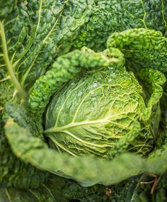 Savoy cabbage is a favorite for this Wisconsin gardener.