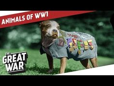 An EXCELLENT short video: Companions In The Trenches - Animals of World War 1 - YouTube