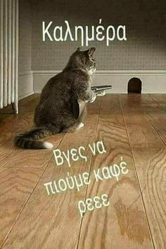 γάτες, ύπουλα πλάσματα Funny Greek Quotes, Funny Quotes, Funny Memes, Jokes, Funny Animal Memes, Cute Funny Animals, Cute Cats, Good Morning Picture, Morning Pictures