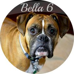 Bella 6 has found her way to her furever home and family!!