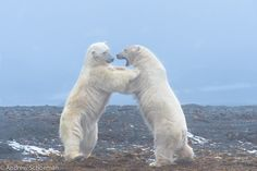 Bear Buddies by Andrew Schoeman on 500px