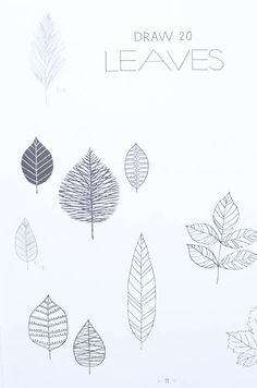 20 Ways to Draw a Tree Book Review by Amy Renea of Crafting With Nature