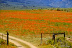 Namaqualand Driveway - South Africa