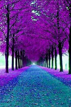 Árboles morados | Purple trees Also Travel on a Budget  Feel free to visit www.spiritofisadoraduncan.com or https://www.pinterest.com/dopsonbolton/pins/
