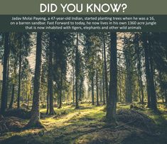 A true lover of nature ♥ Trees To Plant, Did You Know, Acre, Elephant, Plants, Travel, Animals, Viajes, Animales