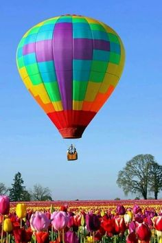 Best proposal Wooden Shoe Tulip Festival hot air balloon (in an hot air balloon above flowers proposal) ah ya rip his arm off oh ya and say yes lol) Balloon Glow, Air Balloon Rides, Hot Air Balloon, Balloons, Balloon Flights, Air Ballon, Ciel, Nature Pictures, Beautiful Landscapes