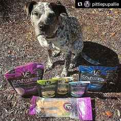 #Repost @pittiepupallie Best way to start the week and rid the Monday blues? A variety package of @vitalessentialsraw food and treats! I got turkey and beef freeze dried food, duck and beef tripe freeze dried treats, freeze dried minnows, and turkey necks! 😋 Love this brand and the pawesome raw products they offer! If you have any questions about starting raw feeding, DM Laura @vitalessentialsraw and she's happy to help 💜 -------------------------------------------- Follow my pawtners…