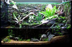 Paludarium journal - Page 2 Terrarium Tank, Reptile Terrarium, Garden Terrarium, Glass Terrarium, Terrarium Ideas, Aquatic Turtle Habitat, Aquatic Turtles, Paludarium, Tanked Aquariums