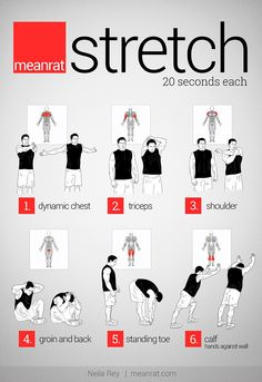 Como estirar cada grupo muscular - meanrat stretch #stretching  #exercise
