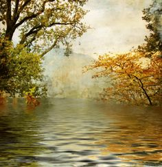 Vinilos Decorativos: Naturaleza en otoño