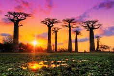 Die Baobab-Allee in Madagaskar