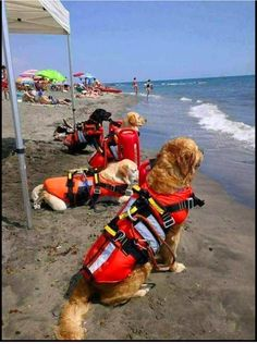 Beach rescue dogs❤❤