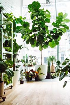Style Your Home with Plants