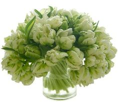 Fringed Green French Tulips