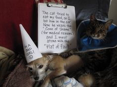 "This is Annie. Morpheus the cat is bigger than her, but that didn't stop her from defending her dinner when he tried to muscle in on it. He then had to wear an E-collar to protect his ear, so she had to wear a hat. The sign reads "" The cat tried to eat my food, so I bit him …"